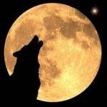 El lobo y la Esclerosis Múltiple